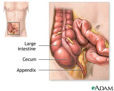 who say appendix has no benefit? - natural healthy lifestyle, Cephalic Vein